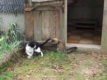 deux chats jouant dans le chenil