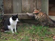 chats dans le chenil de kersaby