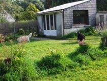 deux chiens en promenade dans le parc du chenil