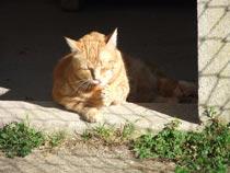 heure de la toilette un chat à kersaby
