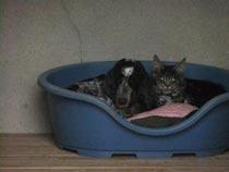 chien et chat ensemble dans un box
