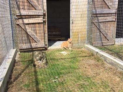 chenil kersaby pension pour chats et chiens finsitere